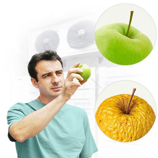 Growers-Distributors-Apples