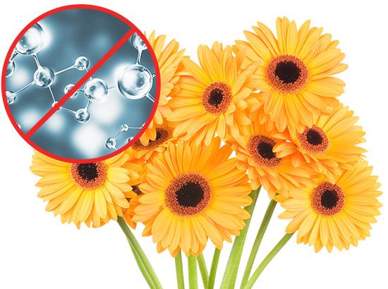 Floral-Ethylene
